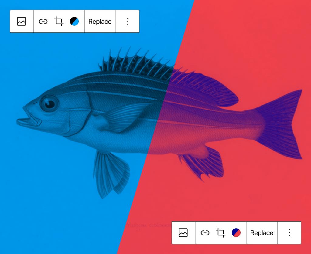 Darstellung zweier Varianten des Duotone-Filters auf einem Bild eines Fisches. Die linke Seite hat Schwarz und Blau als Effektfarben, rechts Blau und Rot.